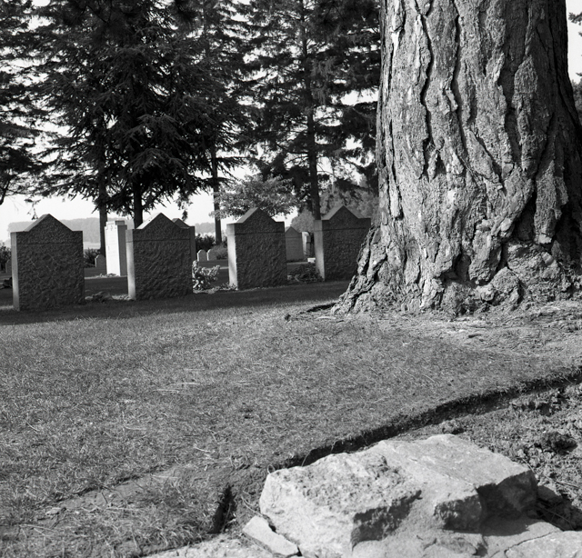 St. Symphorien Military Cemetery-149